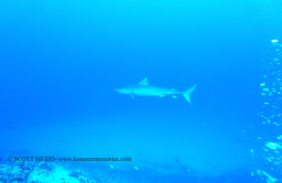 tigershark naiabay6 110217thurs
