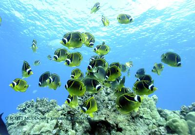 raccoonbutterflyfish turtleheaven5 112917wed