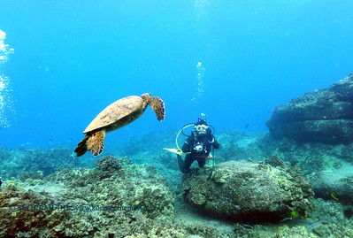 diver turtle turtleheaven 110217thurs