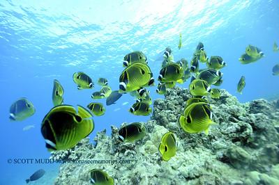 raccoonbutterflyfish turtleheaven 112917wed