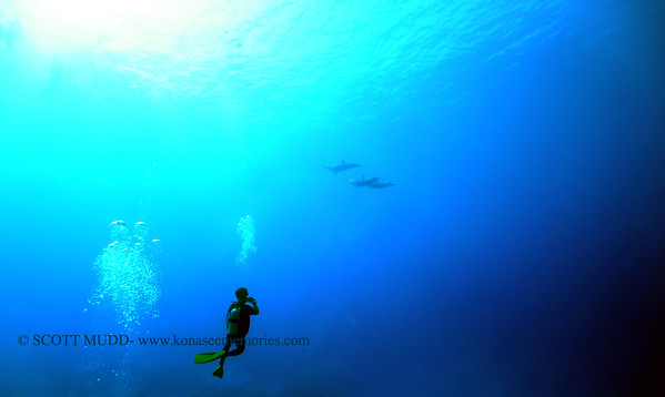 spinnerdolphins naiabay8 110317fri