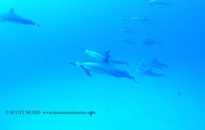 spinnerdolphins naiabay4 110317fri
