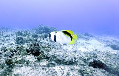 lemonbutterflyfish turtleheaven4 112717tues