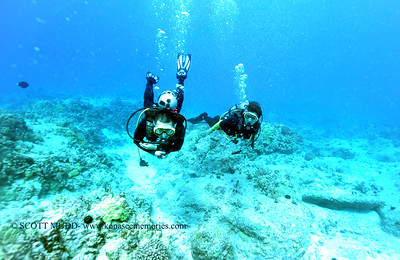 divers turtleheaven 110117wed