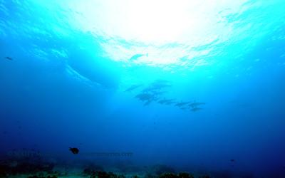 spinnerdolphins naiabay 112617 sun