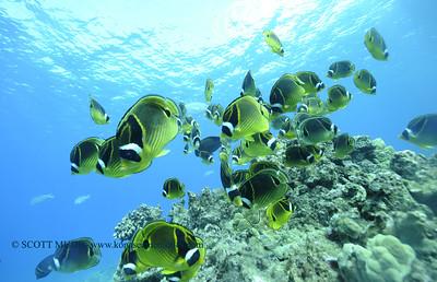 raccoonbutterflyfish turtleheaven2 112917wed
