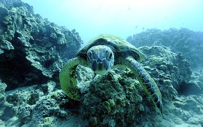 greenseaturtle turtleheaven6 120717thurs