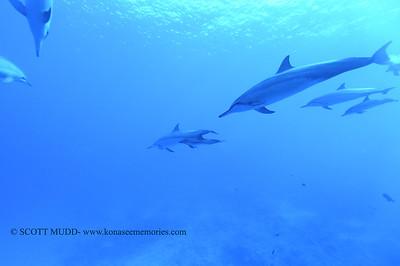 spinnerdolphins naiabay 123017sat