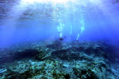divers theshute 120317sun