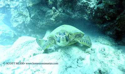 greenseaturtle turtleheaven3 120717thurs