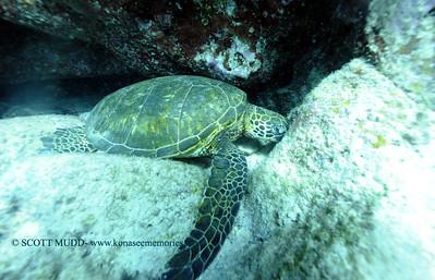 greenseaturtle turtleheaven 121817mon