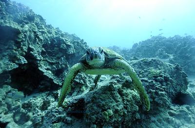 greenseaturtle turtleheaven7 120717thurs