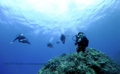 divers turtleheaven3 122617tues