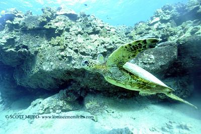greenseaturtle turtleheaven 120317sun