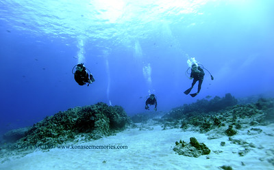 divers turtleheaven 120317sun