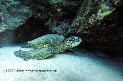 greenseaturtle turtleheaven5 121817mon