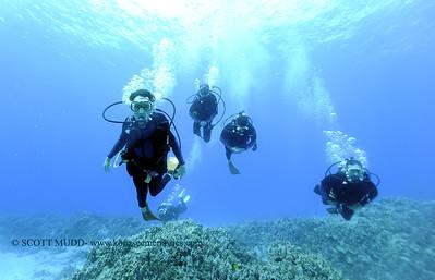divers turtleheaven 122617tues
