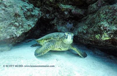 greenseaturtle turtleheaven4 121817mon