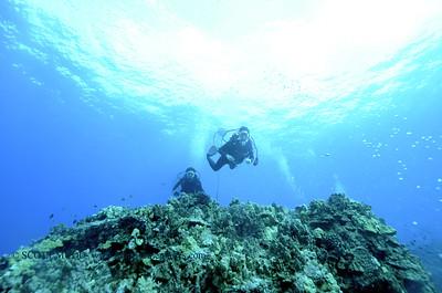 divers turtleheaven2 120317sun