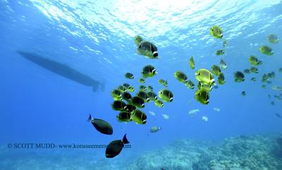 raccoonbutterflyfish turtleheaven 120317sun