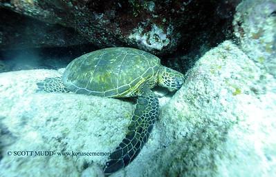 greenseaturtle turtleheaven2 121817mon