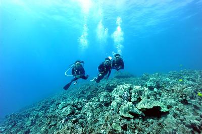 divers bodyglove2 020517sun