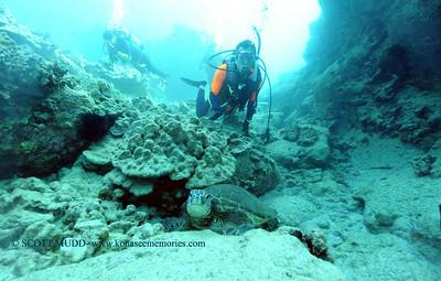 divers turtle turtleheaven 022117tues