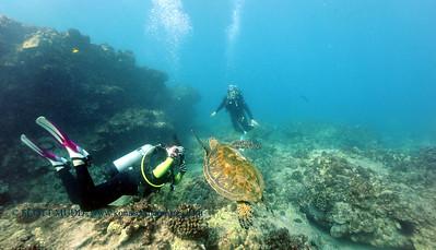 divers turtle turtleheaven2 022117tues