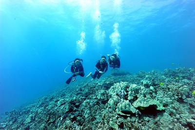 divers bodyglove3 020517sun