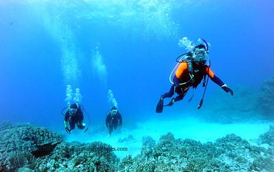 divers turtleheaven3 022117tues