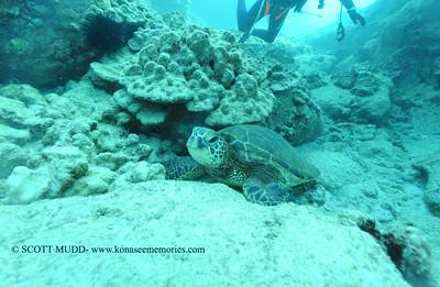 greenseaturtle turtleheaven2 022117tues