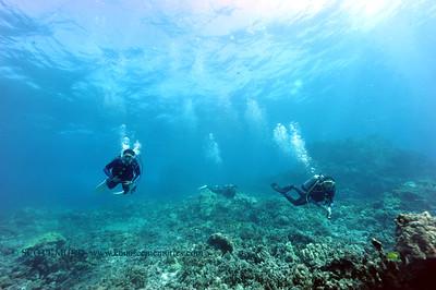 divers bodyglove 020517sun