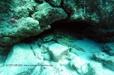 greenseaturtle turtleheaven 022117tues