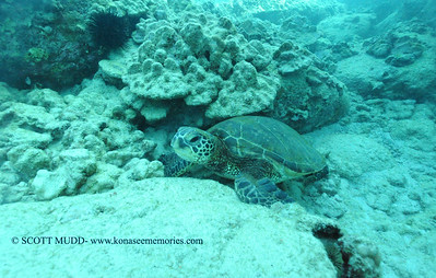 greenseaturtle turtleheaven3 022117tues