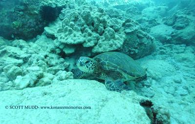 greenseaturtle turtleheaven3 022117tues
