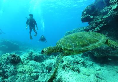 divers turtle turtleheaven7 022217wed