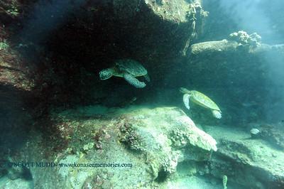 greenseaturtles turtleheaven 022117tues