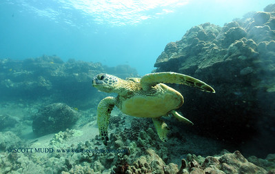 greenseaturtle turtleheaven7 022117tues
