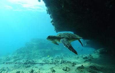 greenseaturtle turtleheaven5 022117tues