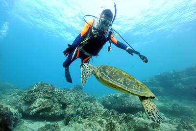 divers turtle turtleheaven3 022117tues