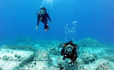 divers turtleheaven 031817sat