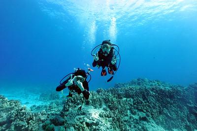divers turtleheaven3 031817sat