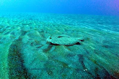 flounder gardeneelcove2 031117sat