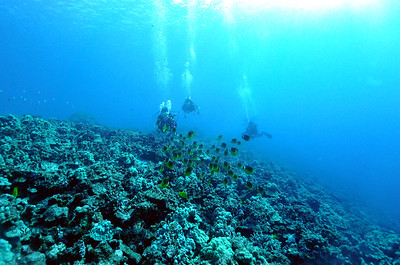 divers raccoonbutterflyfish thunderreef 031217sun