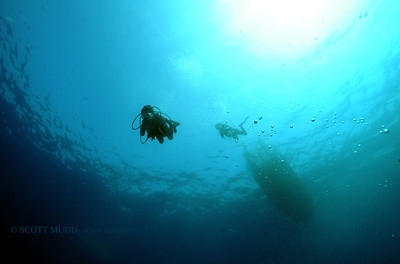 divers greencan2 032117tues