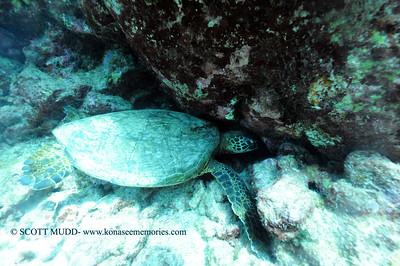 turtle turtleheaven 031817sat