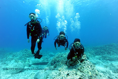 divers turtleheaven3 031717fri