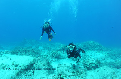 divers turtleheaven2 031817sat