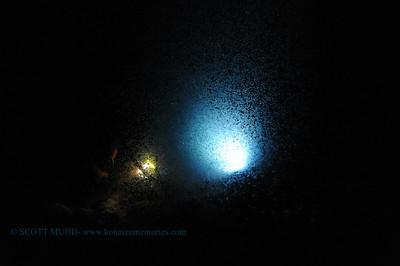 plankton keauhou2 040317mon