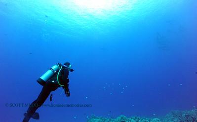 divers dolphins turtleheaven2 041017mon